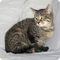 Adopt A Pet :: Katty - Powell, OH