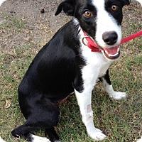 Adopt A Pet :: ALANA - San Pedro, CA