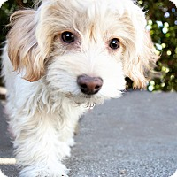 Adopt A Pet :: Cheesecake** Video** - Pasadena, CA