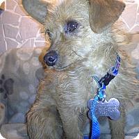 Adopt A Pet :: Pixie - El Paso, TX
