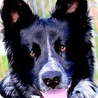 Adopt A Pet :: MAVERICK(SO SMART! WOW! - Wakefield, RI