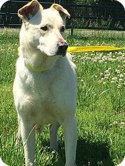 Labrador Retriever Mix Dog for adoption in Gallatin, Tennessee - Molly