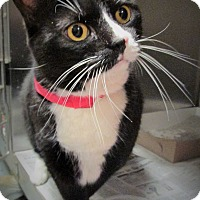 Adopt A Pet :: Chloe (foster care) - Philadelphia, PA