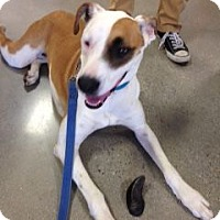 Adopt A Pet :: Sandy - Knoxville, TN