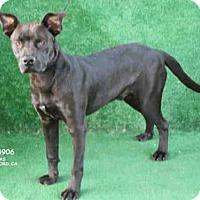 Adopt A Pet :: A084906 - Hanford, CA