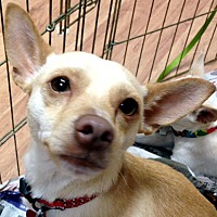 Adopt A Pet :: Samson - Tijeras, NM