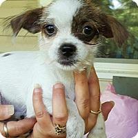 Adopt A Pet :: Elsa - Medora, IN