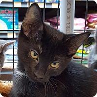 Adopt A Pet :: Charlie - Toronto, ON