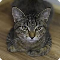 Adopt A Pet :: Hannah - Lincoln, CA