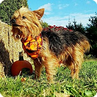 Adopt A Pet :: Reggie - Freehold, NJ