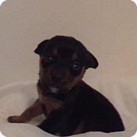 Adopt A Pet :: Serena - ROSENBERG, TX