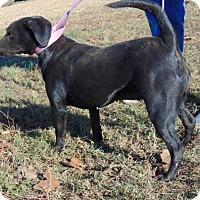 Adopt A Pet :: Kinko - Chicopee, MA