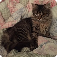 Adopt A Pet :: Angelica - Harrison, NY