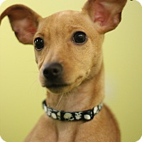 Adopt A Pet :: Buster - Lafayette, IN
