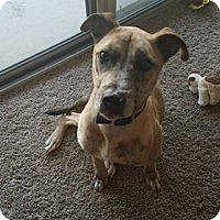 Adopt A Pet :: ROPER - Williamsburg, VA