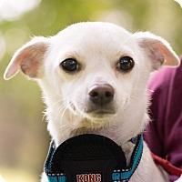 Adopt A Pet :: Pablo - Fort Atkinson, WI