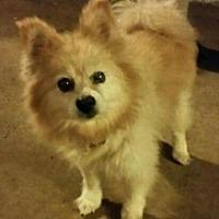 Adopt A Pet :: Lady - Northport, AL