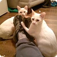 Adopt A Pet :: Monkey and Polar Bear - Fairfax, VA