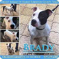 Adopt A Pet :: Brady - Hearne, TX