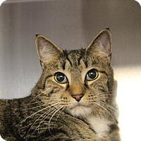 Adopt A Pet :: Tyson - Sarasota, FL