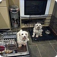 Adopt A Pet :: Billy - Freeport, NY