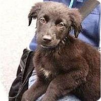 Adopt A Pet :: Barbados - Cumming, GA
