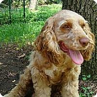 Adopt A Pet :: Vincent - Sugarland, TX