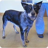 Adopt A Pet :: Jett - Wickenburg, AZ