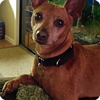 Adopt A Pet :: Kobe - Sacramento, CA