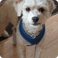 Adopt A Pet :: Wilson - San Francisco, CA
