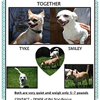 Adopt A Pet :: Tyke & Smiley - SIMI VALLEY, CA