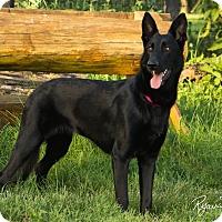 Adopt A Pet :: Diva - Georgetown, KY