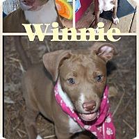 Adopt A Pet :: Winnie meet me 8/28 - East Hartford, CT