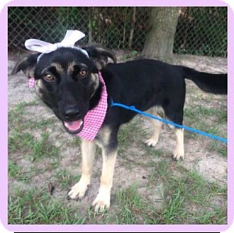 - New Jersey Dog Rescue - ADOPTIONS - Rescue Me!