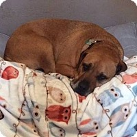 Adopt A Pet :: Maddie - Palm City, FL