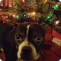 Adopt A Pet :: Winston Troy - various cities, FL