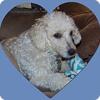 Adopt A Pet :: Adopted!!Christmas - IL - Tulsa, OK