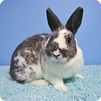 Adopt A Pet :: Speckles - Fountain Valley, CA