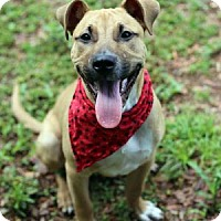 Adopt A Pet :: Bruno - Lakeland, FL