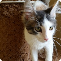 Adopt A Pet :: Truffle - Chula Vista, CA