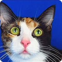 Adopt A Pet :: Mini Me - Sherwood, OR
