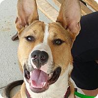 Adopt A Pet :: Loki - Lisbon, OH