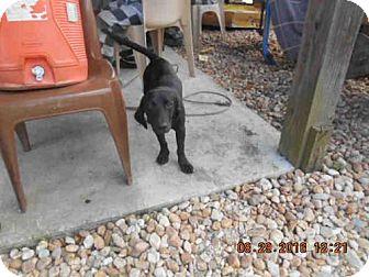 Basset Hound Mix Dog for adoption in Panama City, Florida - WOLFGANG