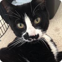 Adopt A Pet :: Smidgen - Salisbury, MA