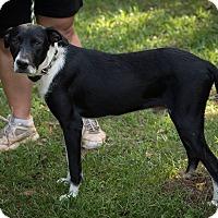 Adopt A Pet :: Sam - Daleville, AL