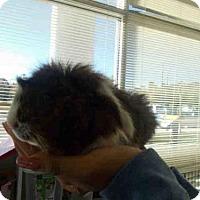 Adopt A Pet :: BOB - Upper Marlboro, MD