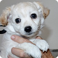 Adopt A Pet :: George - Bellflower, CA