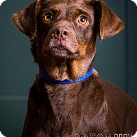 Adopt A Pet :: Holly - Owensboro, KY