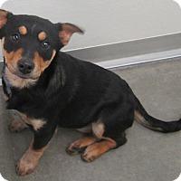 Adopt A Pet :: Marcie - Holton, KS
