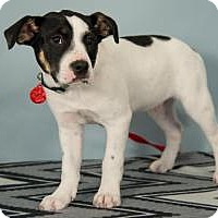 Adopt A Pet :: Riley - Berkeley Heights, NJ